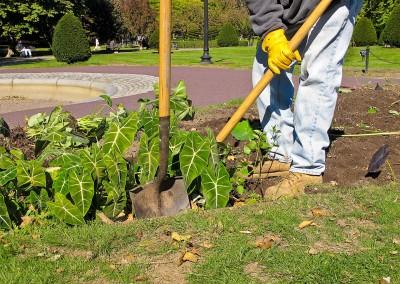 belarbre-services-jardinier-paysagiste-chatou-78400