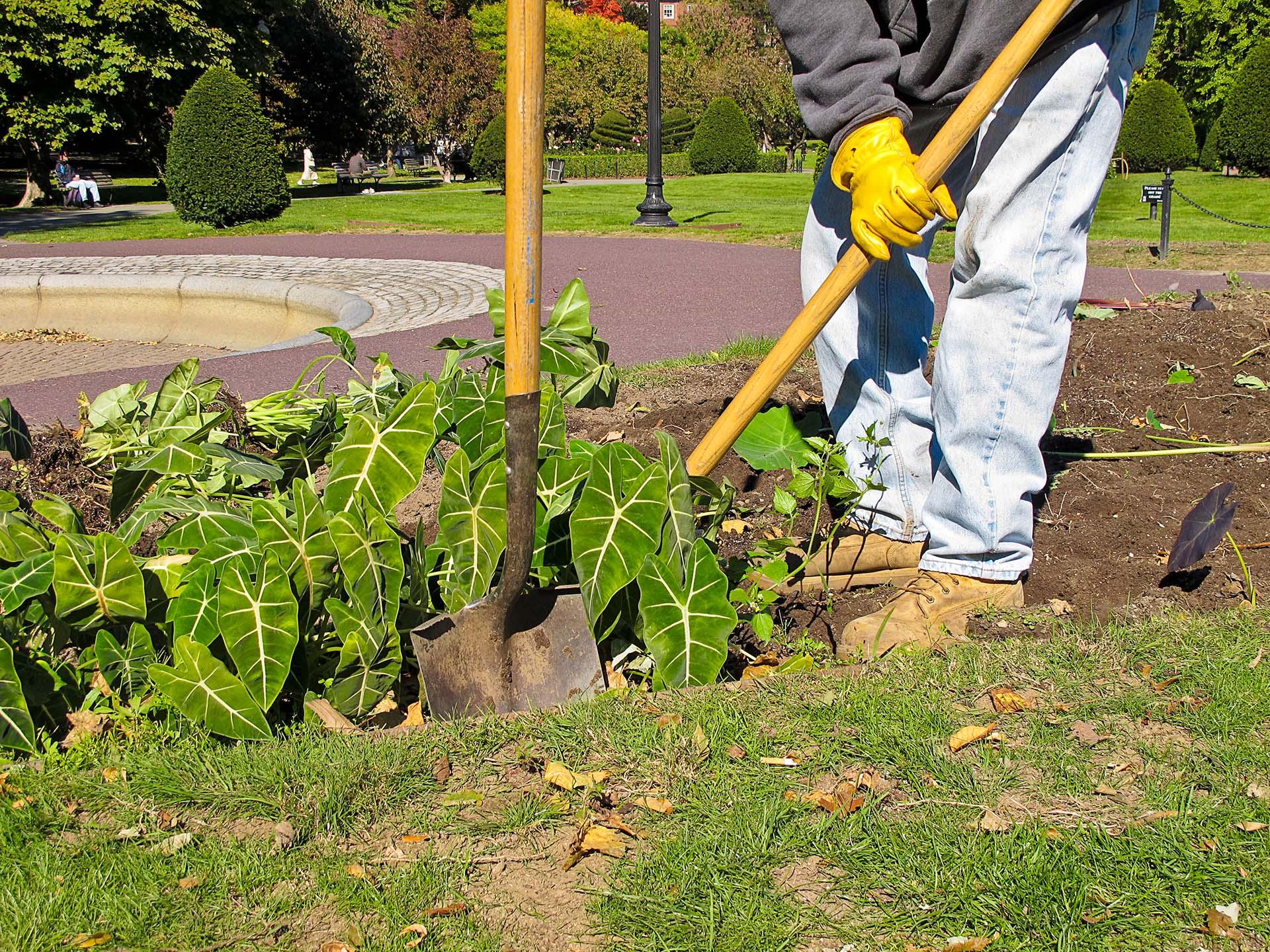 Accueil belarbre service jardinier paysagiste for Conseil de jardinier